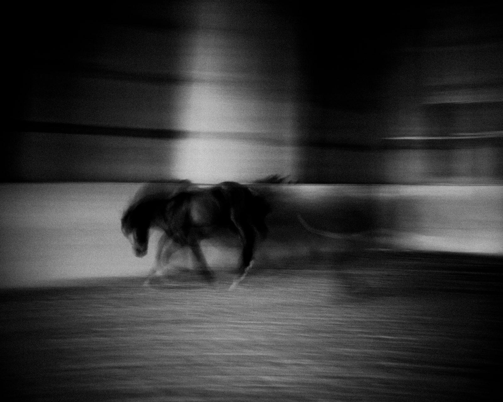 Dallemagne_LensCulture-29